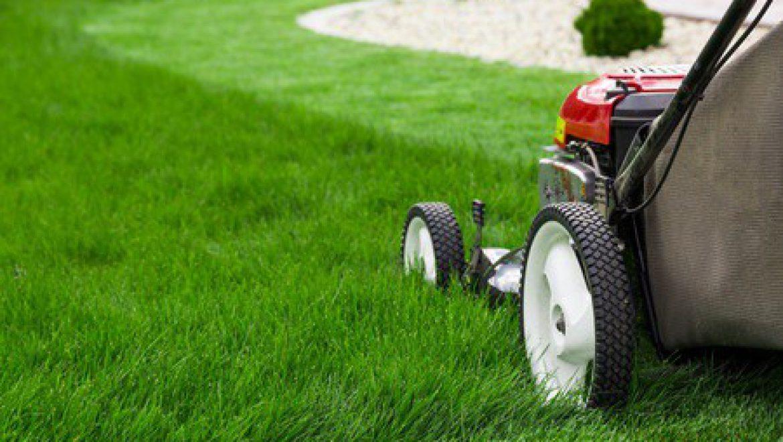 אשדוד, גן יבנה – מה עדיף לגינה שלכם – דשא סינטטי או דשא טבעי?